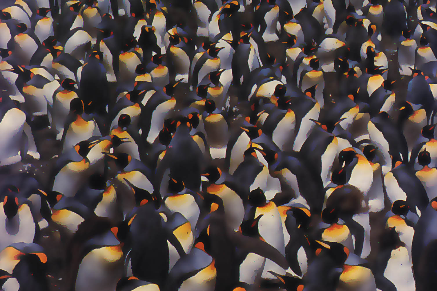 Pinguins-crowd